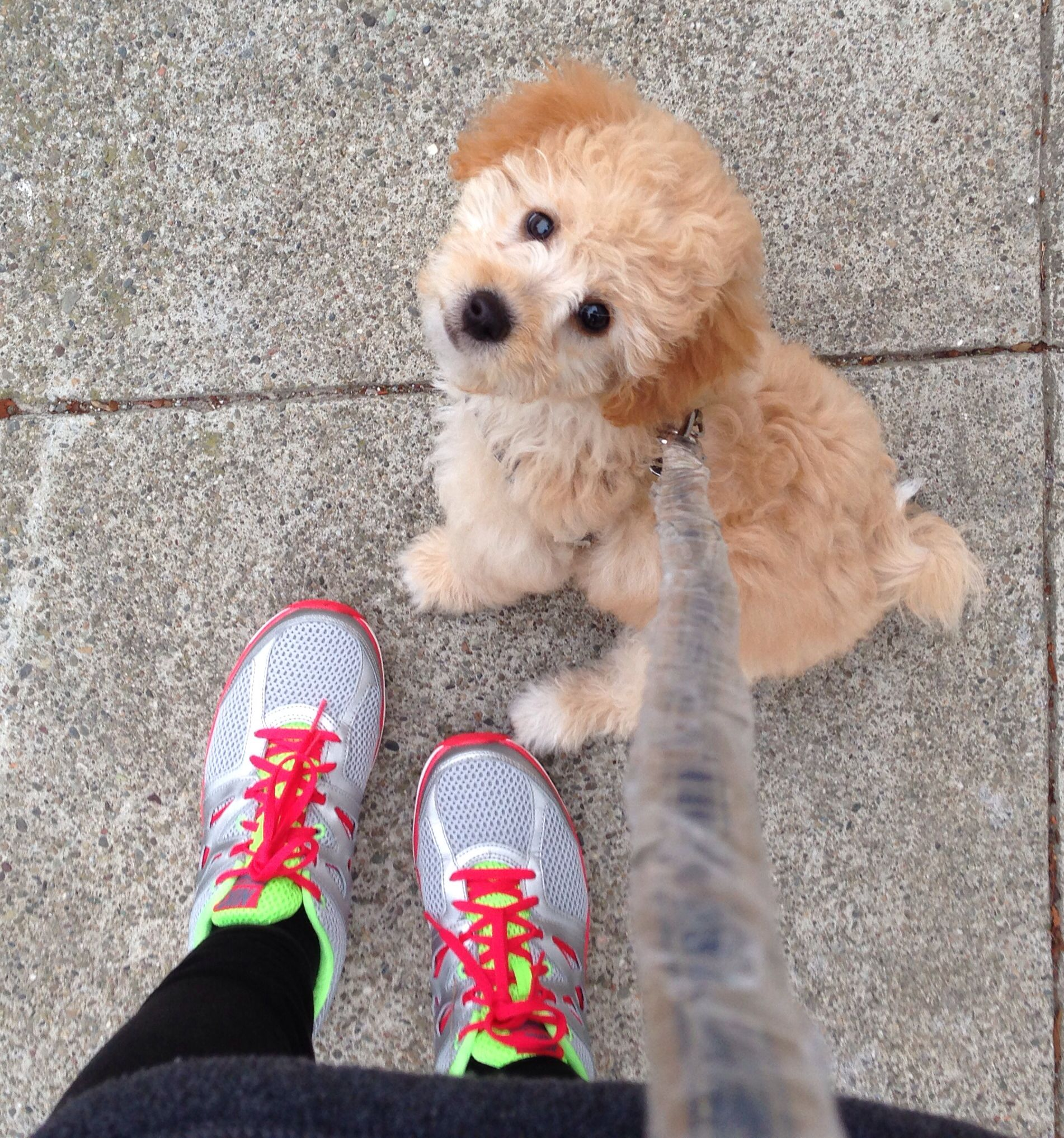 Baby goldendoodle #mine :)   cuteness   Pinterest