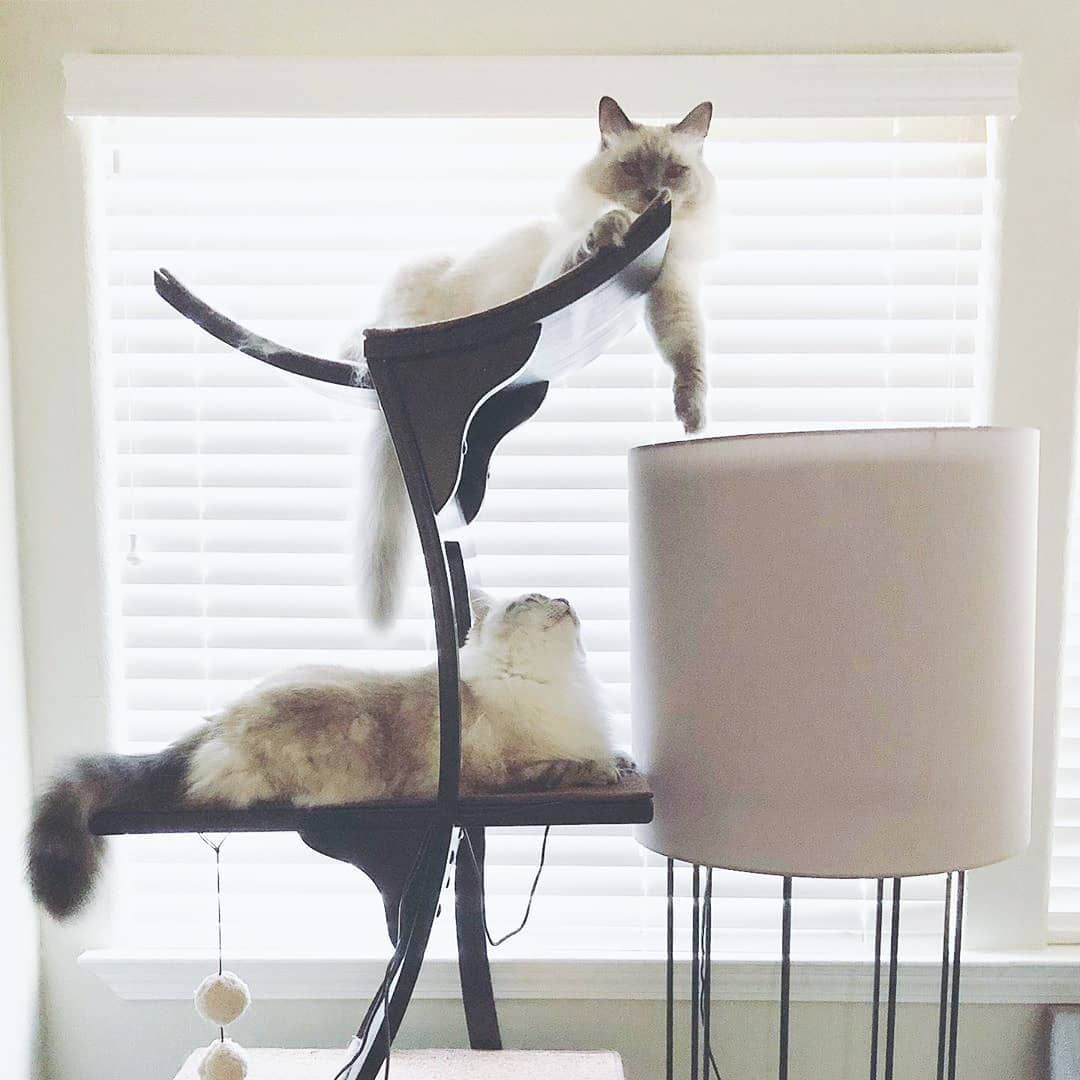 Cats The Reason We Get Out Of Bed Every Morning Literally And Figuratively Thanks Haru X Aki For This Adorable Photo On The Lo With Images Cat Day Cat Nap Cat Tower