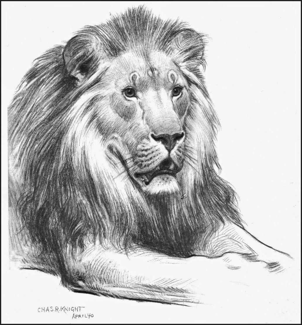 Hd Art Archive Lion Sketch Pencil رسم أسد بالقلم الرصاص Lion Sketch Art Archive Art