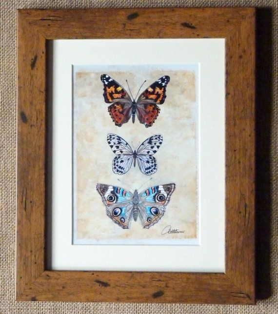 Butterfly Picture Butterfly Art Print  by Canvasbutterfly on Etsy
