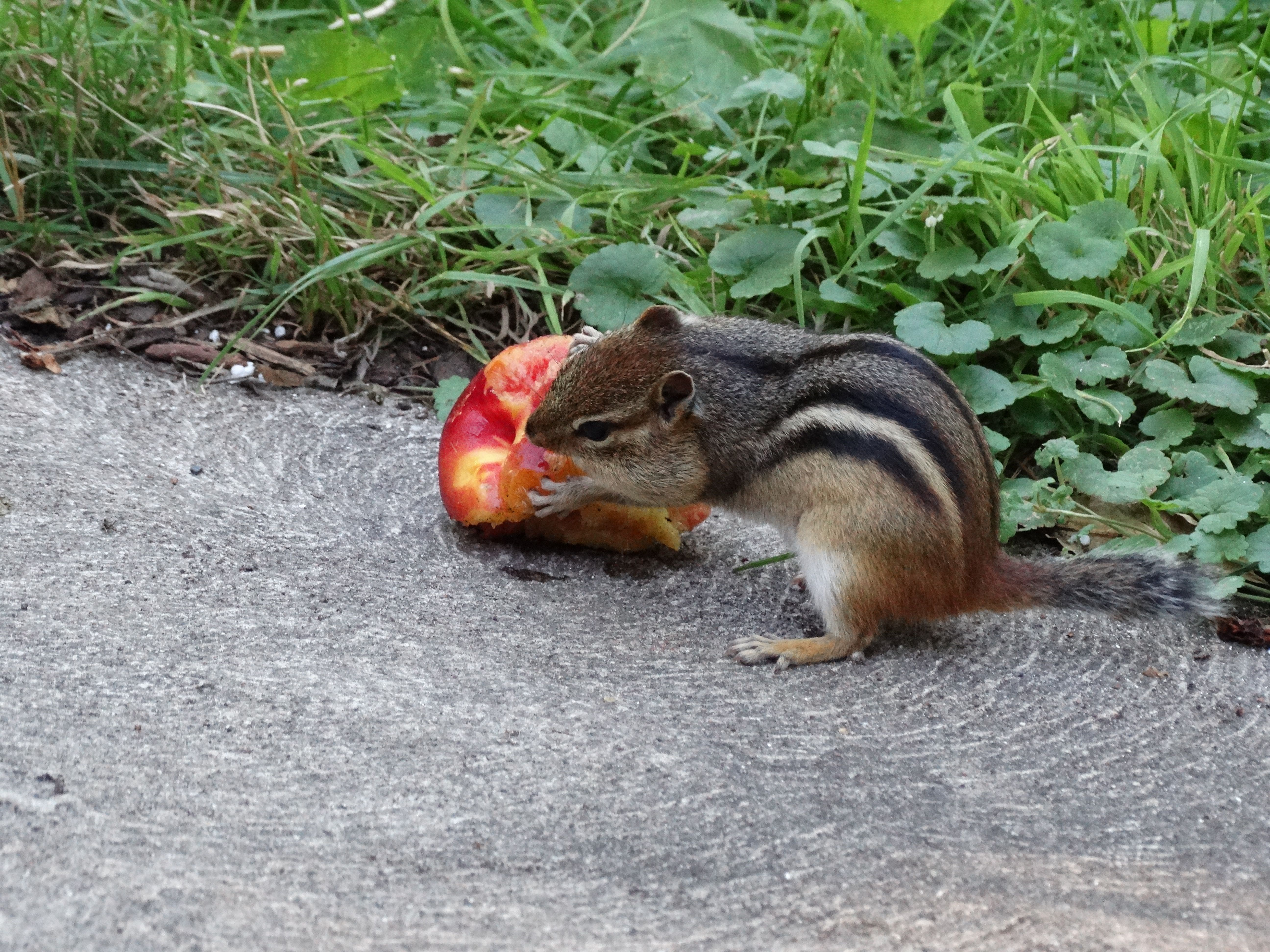 scottie and a nectarine