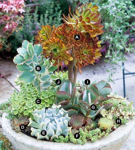 Succulent Container Garden Plans | Succulent Containers, Succulents Garden  And Gardens