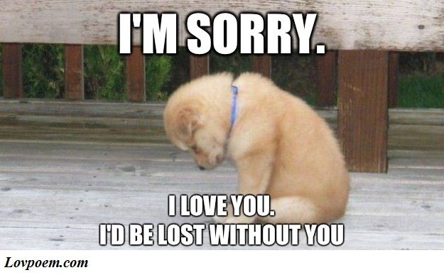70 Memes About Being Sorry For Him Or Her Sweet Memes Puppies Praying Puppy Puppy Meme