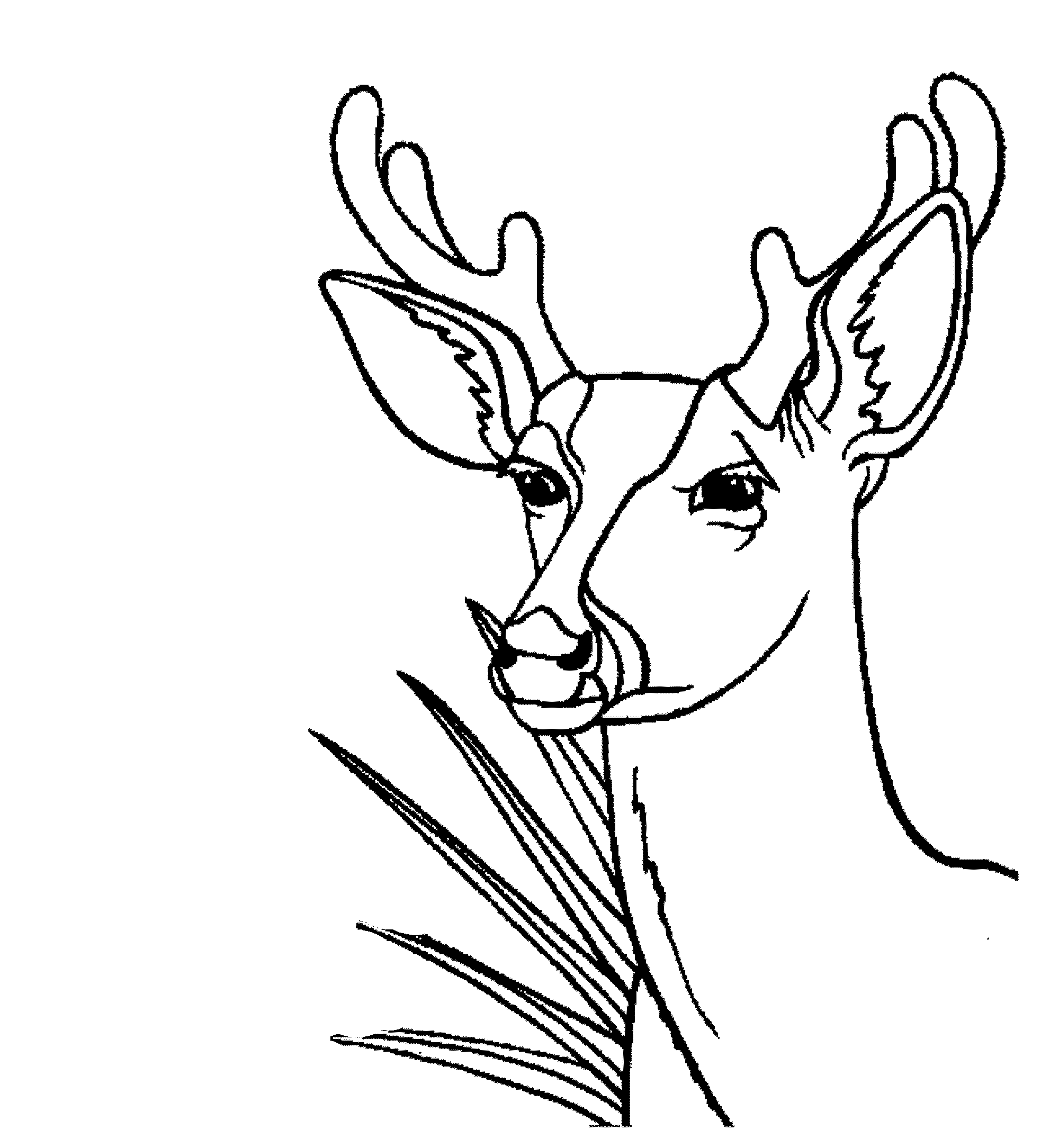 coloring page deer | deer | Pinterest