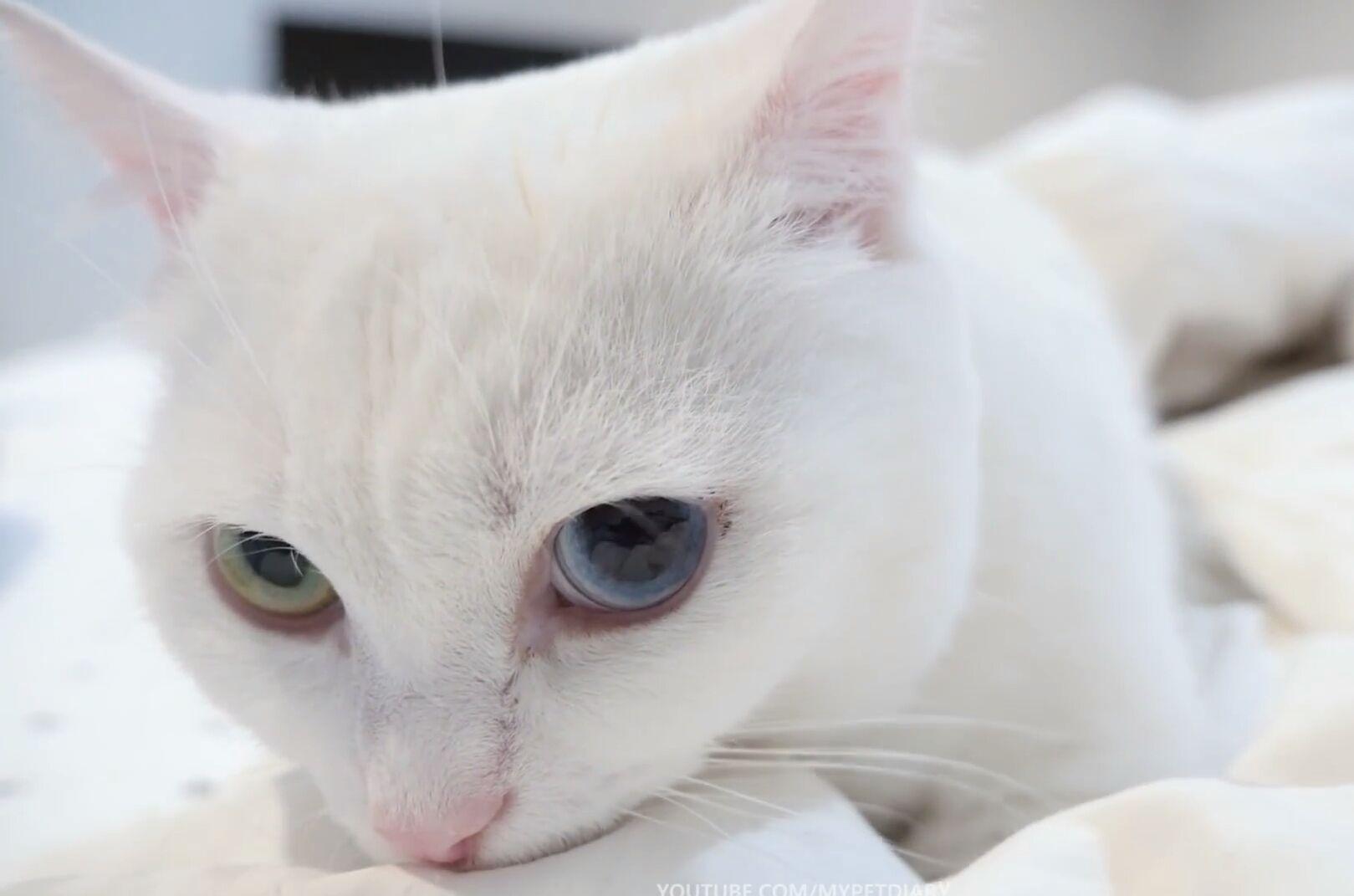 Adopt Blossom Kitten Adoption Cat Adoption Kittens Cutest