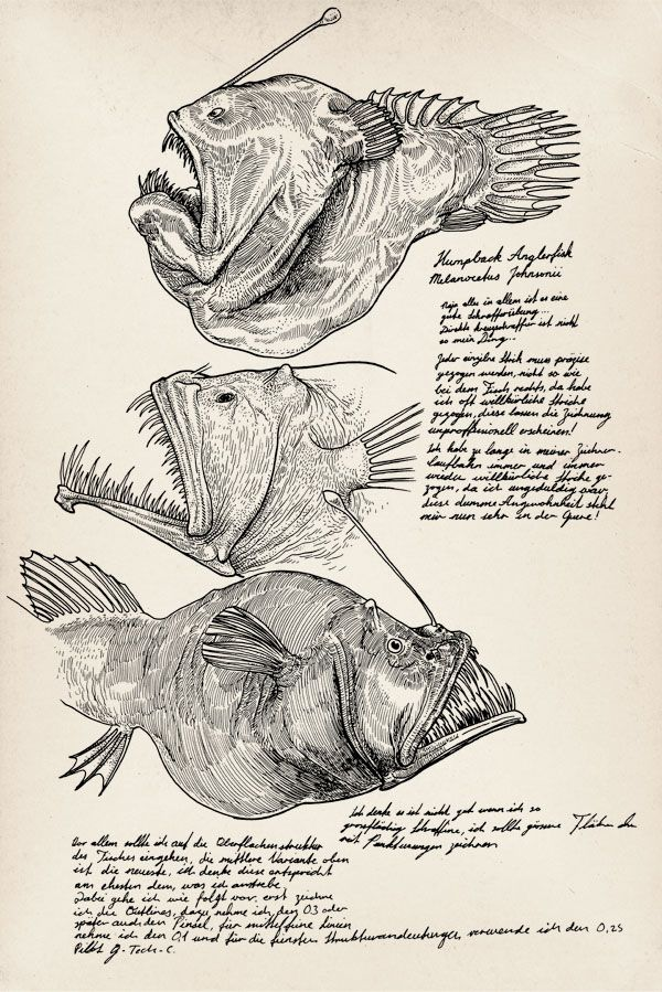 humpback anglerfish melanocetus johnsonii for practice some rh pinterest com