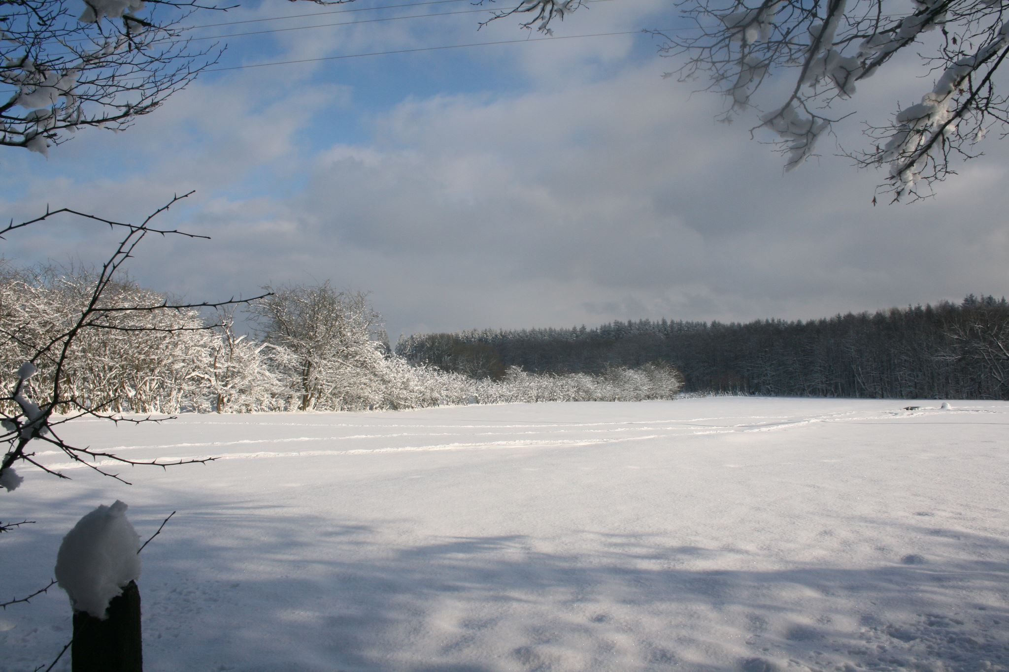 Hiver 2012 2013 Region Baraque Fraiture Belgium Outdoor Snow