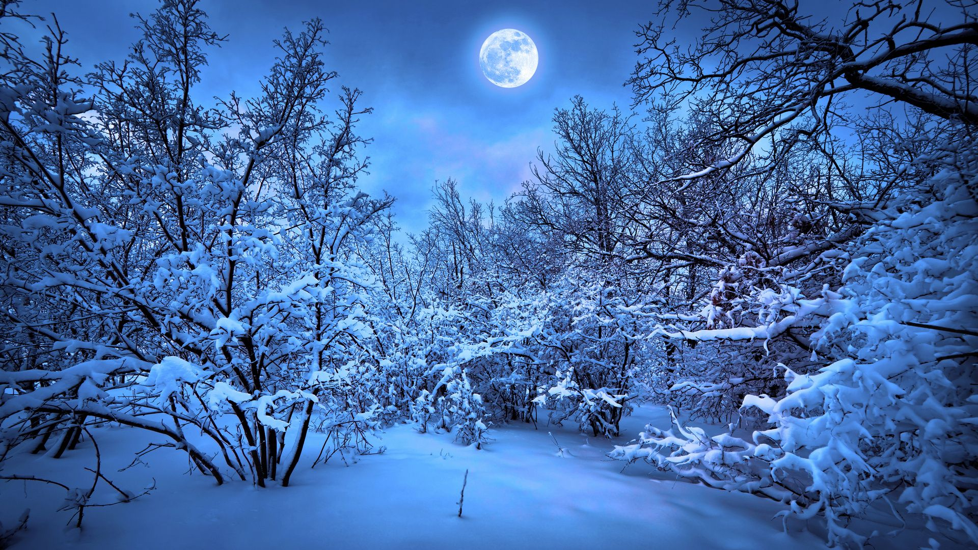 here is snowy night forest wallpaper with id 3288 on forest winter
