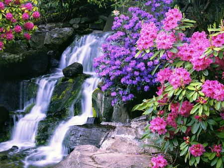 Discover Ideas About Portland Waterfalls Most Beautiful With Flowers