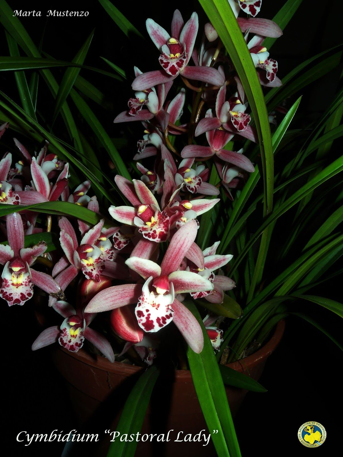Pin by bea flores on orchids pinterest orchid