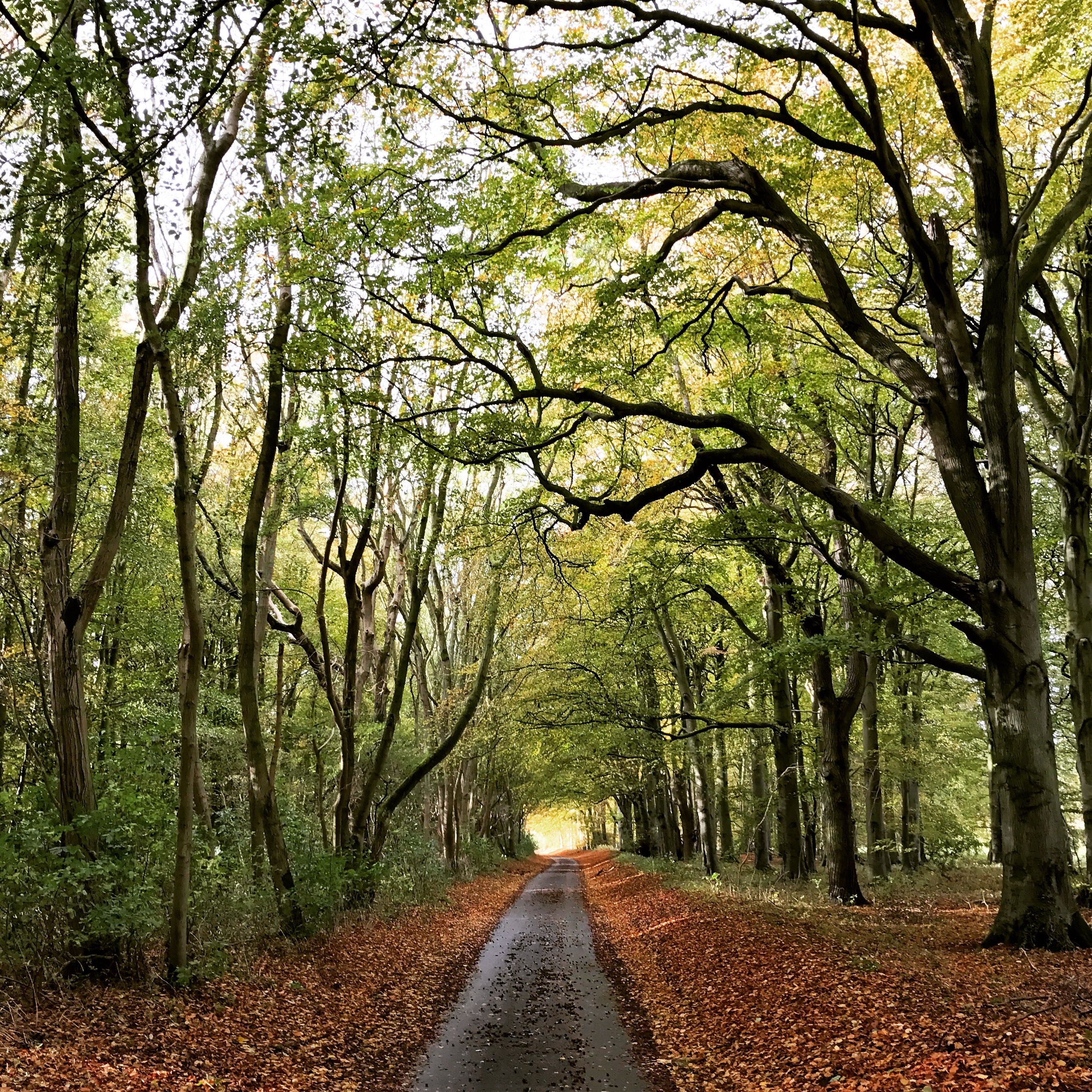 The Road to Happy Valley from Little Massingham - Glamping in Norfolk -  #AutumnGlamping #