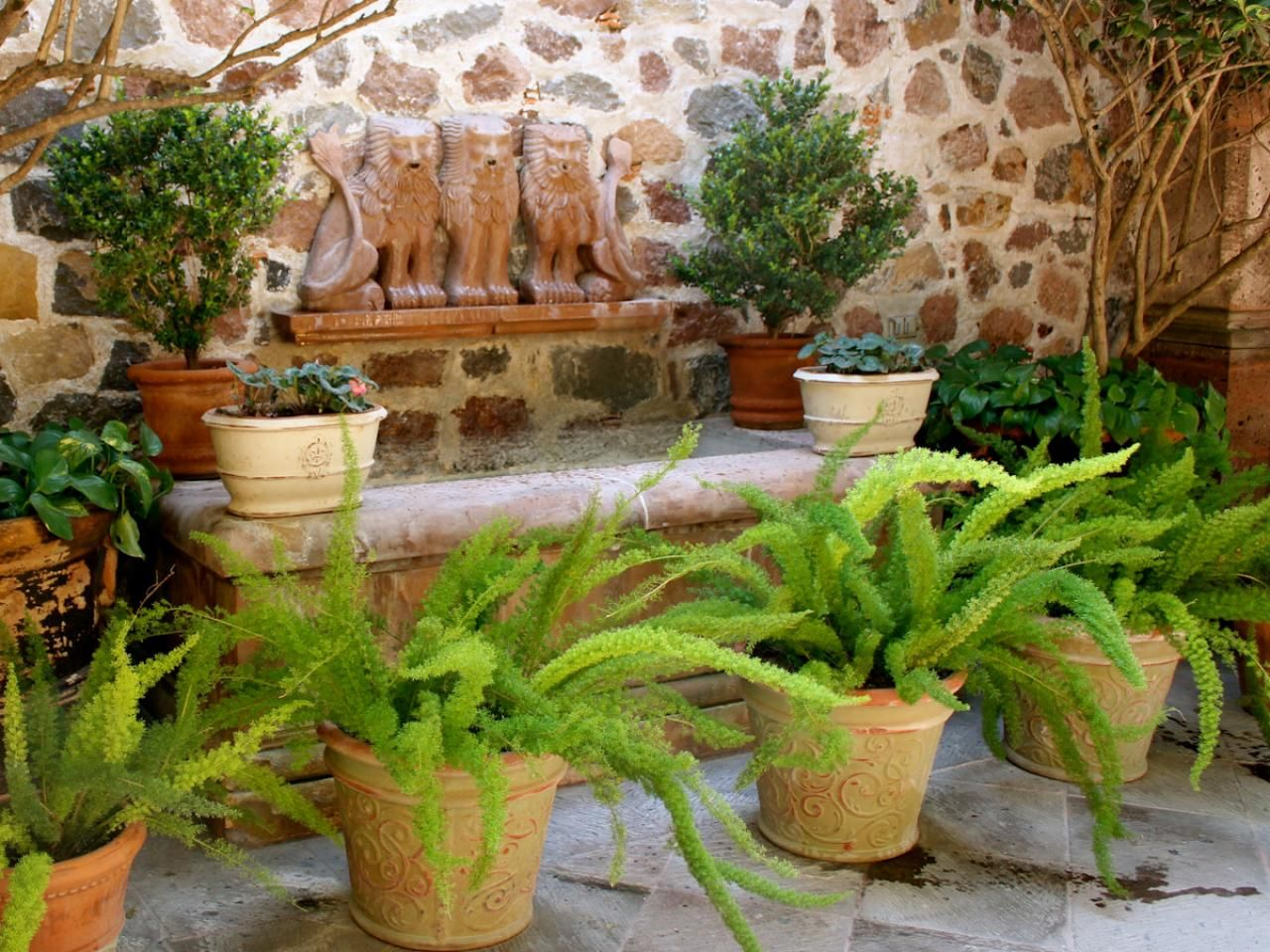how to take care of ferns outside