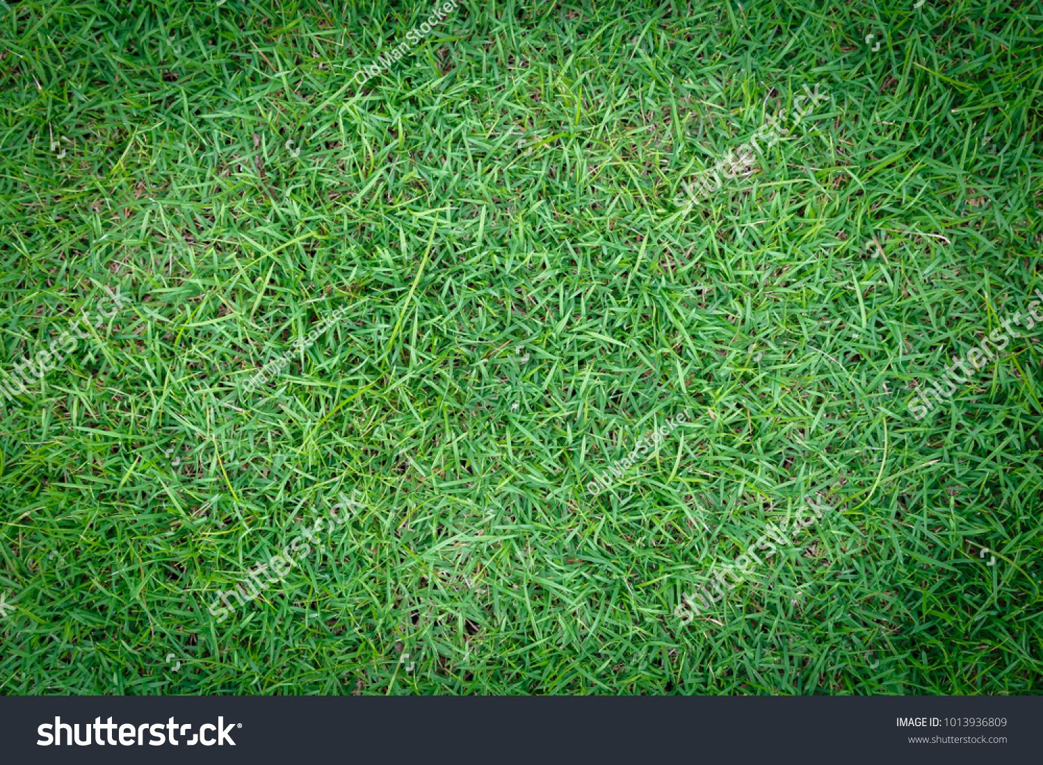 Green Grass Field Background For Soccer And Football Sports Green Lawn Pattern And Texture Background Close Up Image Ad Ad Ba Grass Field Soccer Field