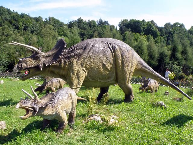 10 Intriguing Facts About Triceratops