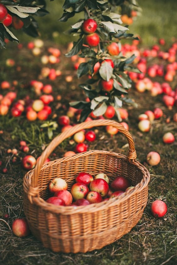 #apple #apples #basket #photography #fruit #helloautumn