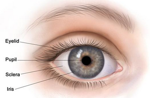 Retinoblastoma forms in the back part of the eye. Here's an overview of this #cancer: http://1.usa.gov/11yjy3L