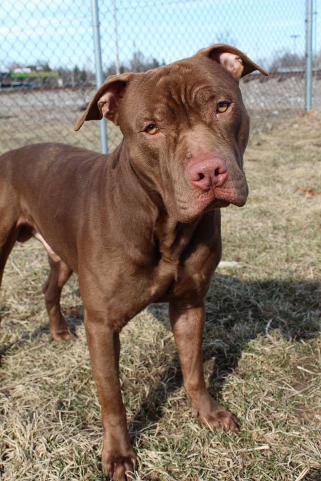 Adopt Kennel 15 On Petfinder Dog Adoption Nanny Dog Animals Friends