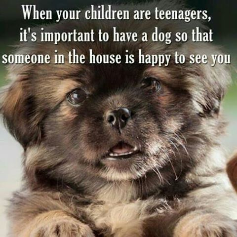 Great alternative!  PS ... they're just as happy to see the teenagers!