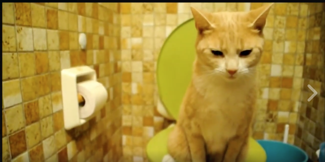 Cat Demonstrates Proper Feline Method Of Using Toilet Cats Cute Cat Gif Funny Cat Videos