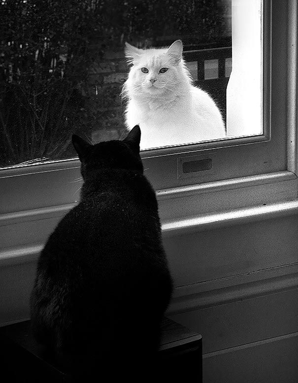 Pictures Of Black And White Cats And Dogs Together