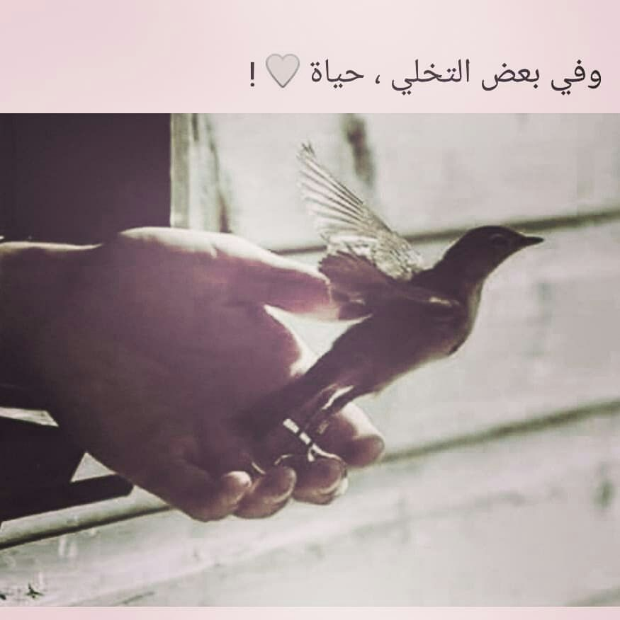 Pin By Fouz Eissa On Bird Watching Everywhere In The World Folder Twenty Two Arabic Quotes Funny Arabic Quotes Beautiful Arabic Words