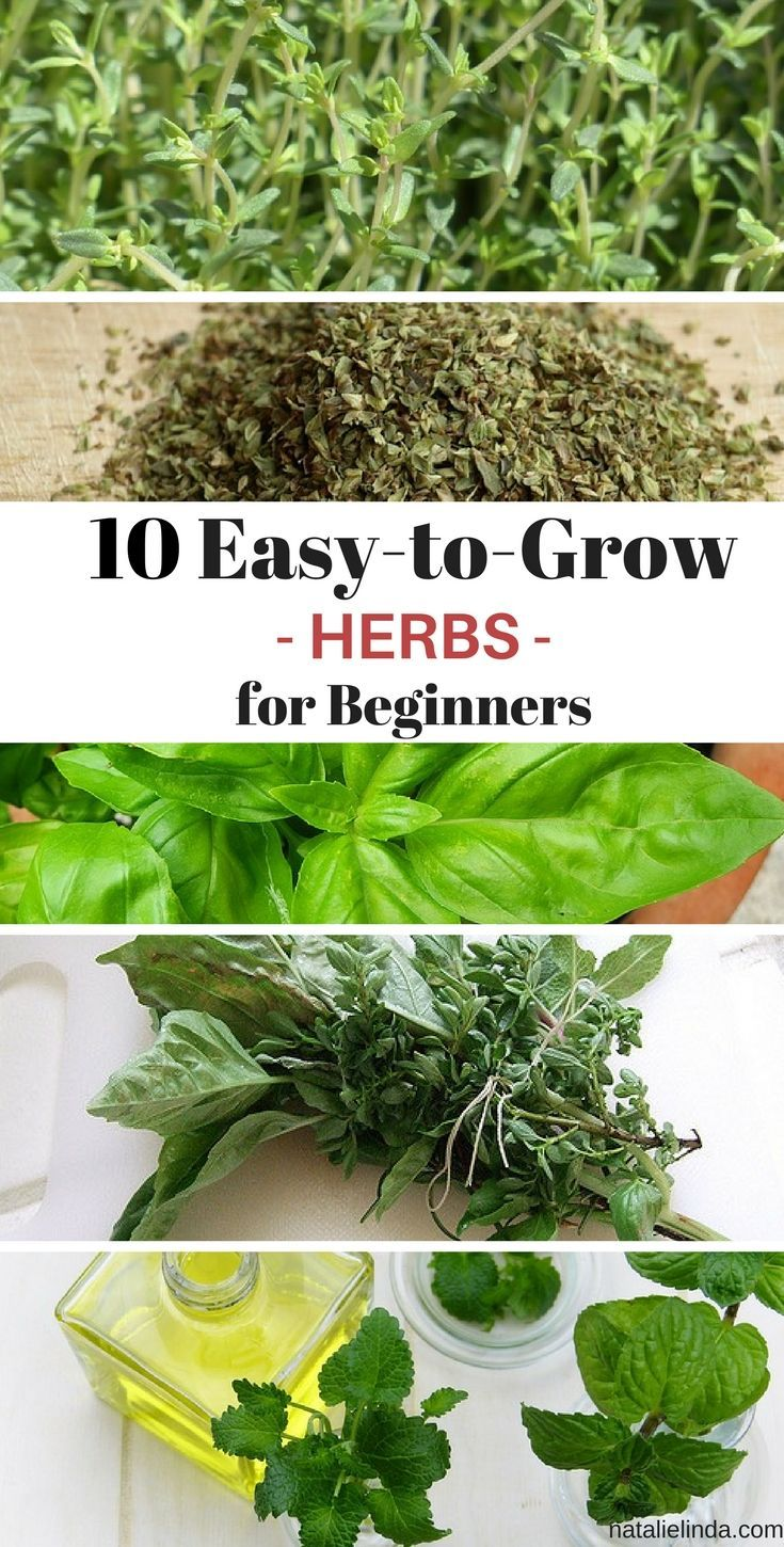 10 Herbs That Are Super Easy To Grow With Images 400 x 300