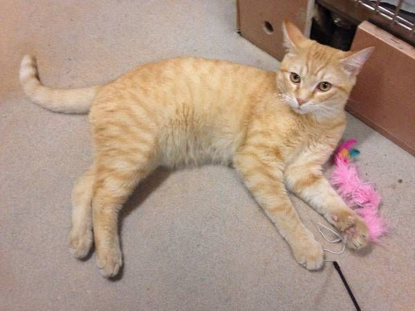 Lost Cat Unknown In East Haven Ct Lostmykitty Com Lost Cat Cats Pet Names