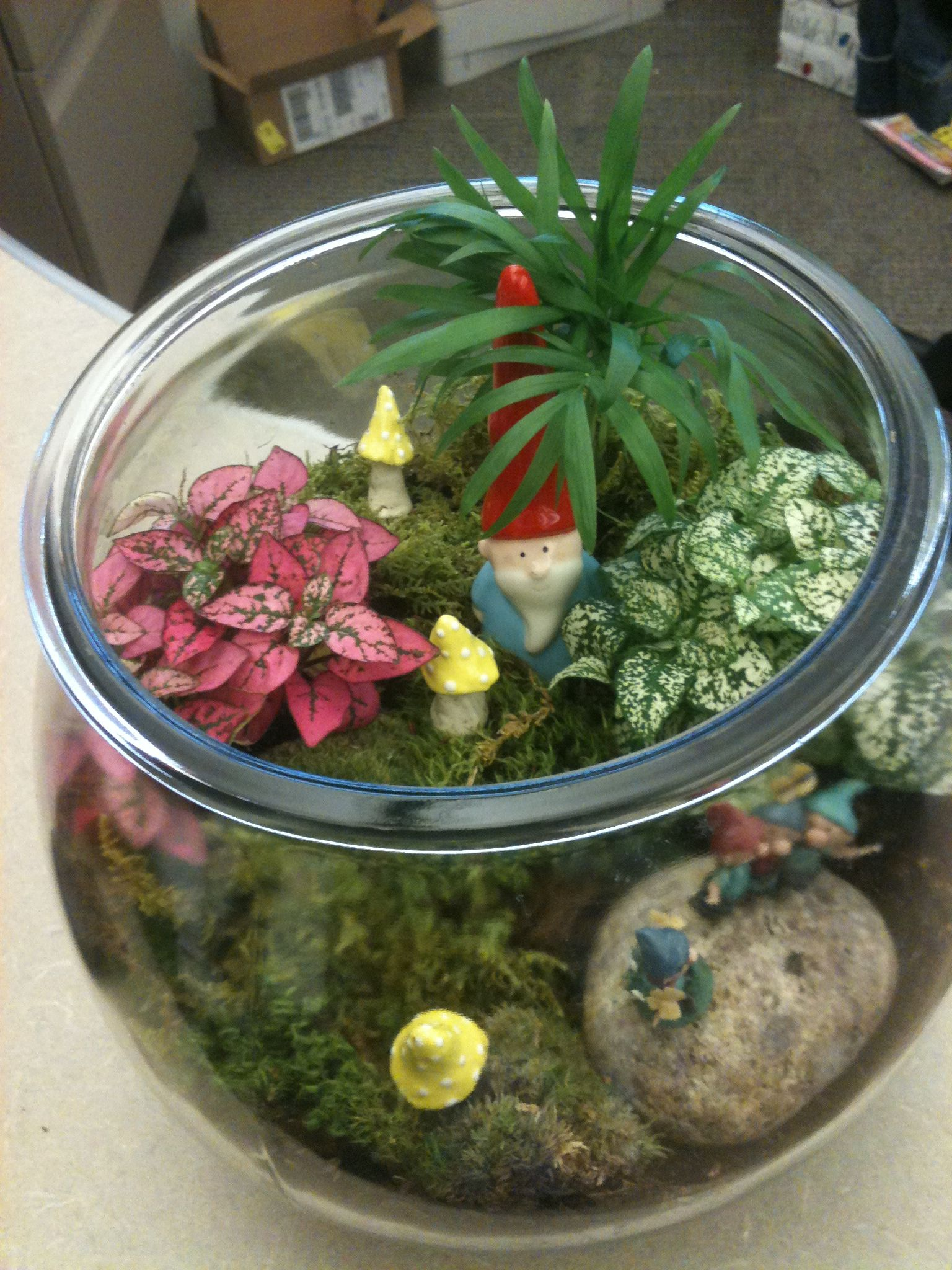Gnome Terrarium  Missys So Talented Air Plant