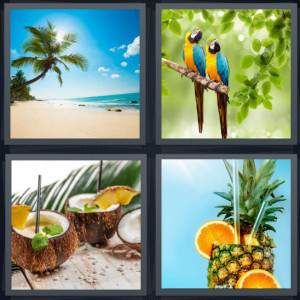 4 Pics 1 Word Answer 8 Letters For Paradise Beach With Palm Tree