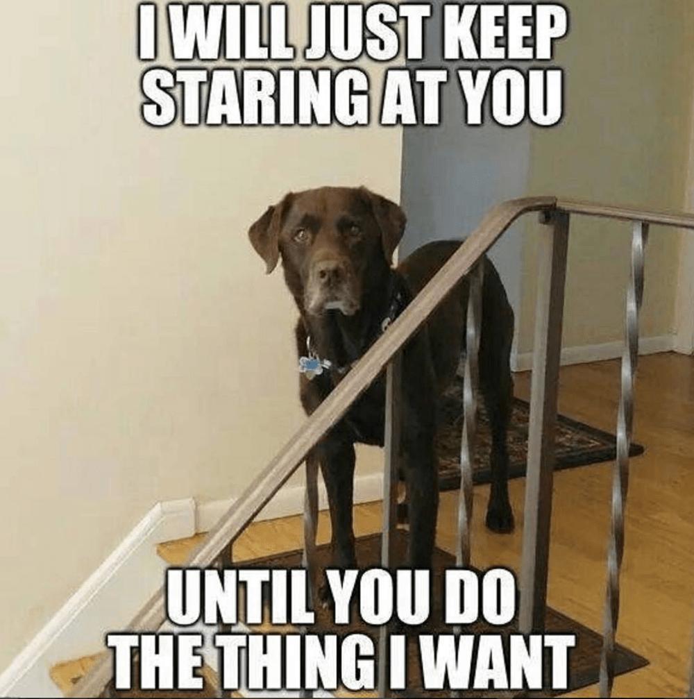 Dog Memes Satisfying The Doggo Obsession Funny Dogs Funny Dog Memes Dog Memes