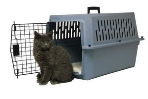 How to Get a Scared Cat Into a Carrier thumbnail Cat