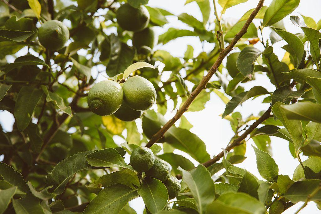 Mandeln sind voll mit Vitamin E und haben eine unglaubliche feuchtigkeitspendende Wirkung auf die Haut und Haar.
