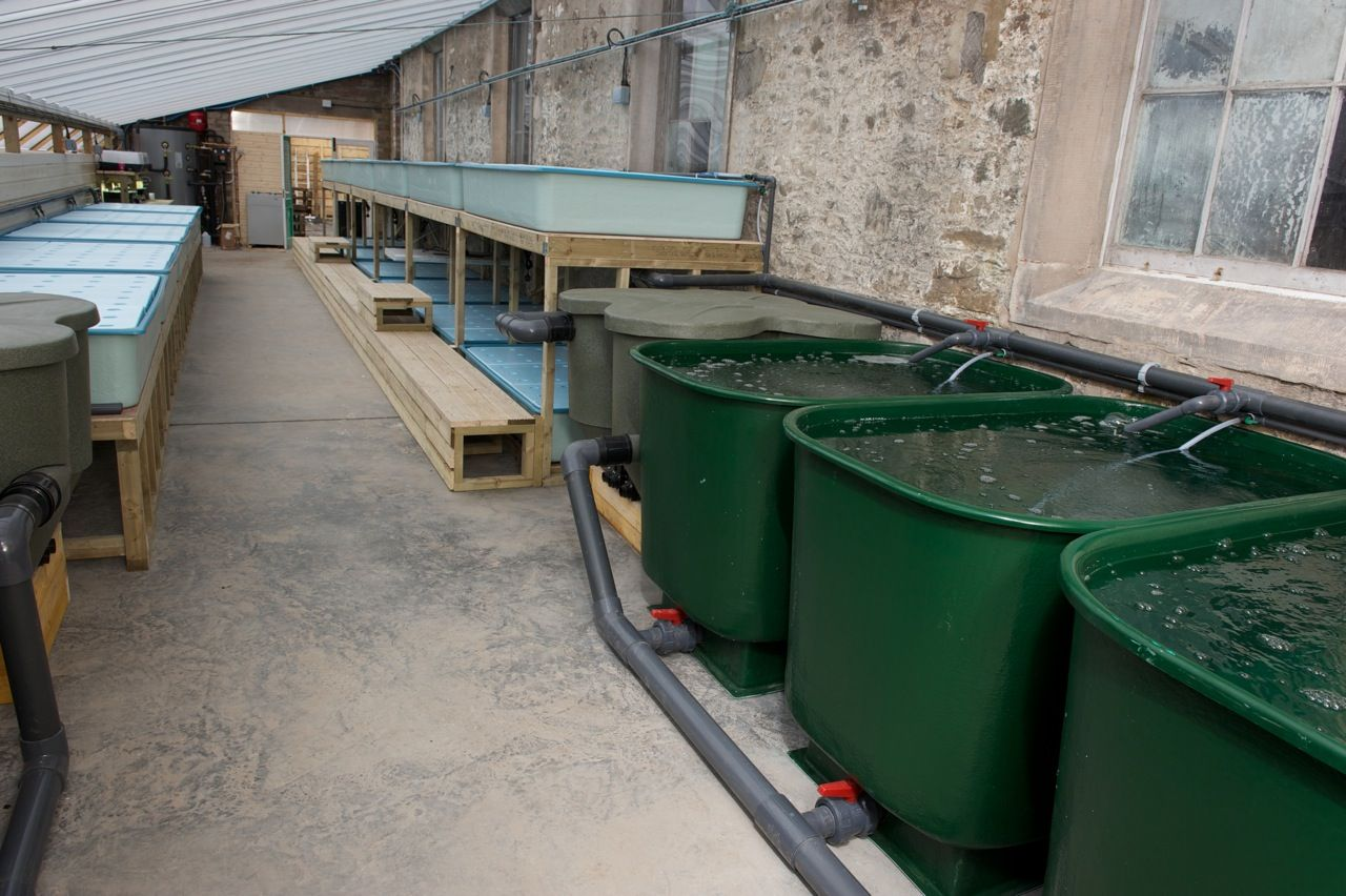 aquaponic fish tanks check out my personal aquaponics project at