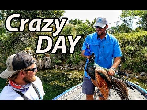 Fishing With Acorns Dead Peacock Birds And Giant Bass FT LUNKERSTV