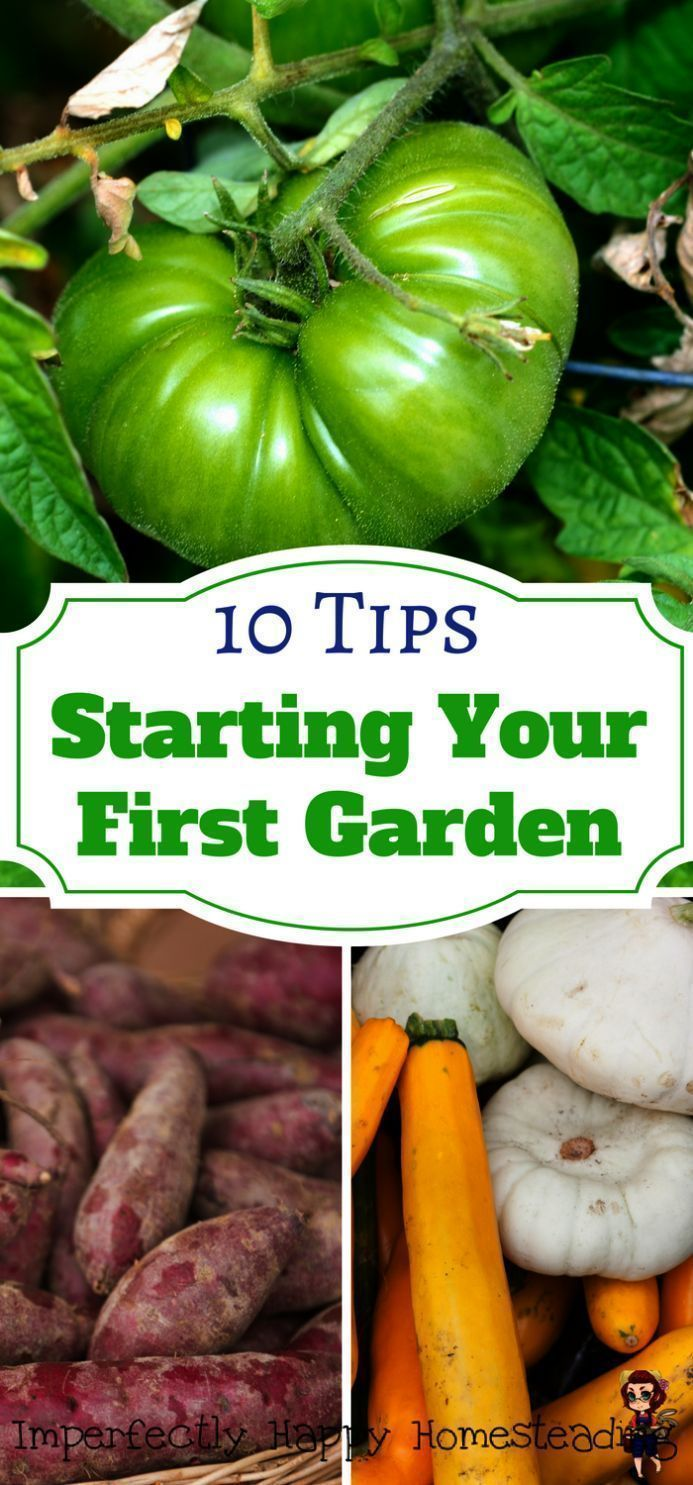 for Nursery for Beginners de Flowers Tips Beginne  for beginners in california for Nursery for Beginners de Flowers Tips Beginne