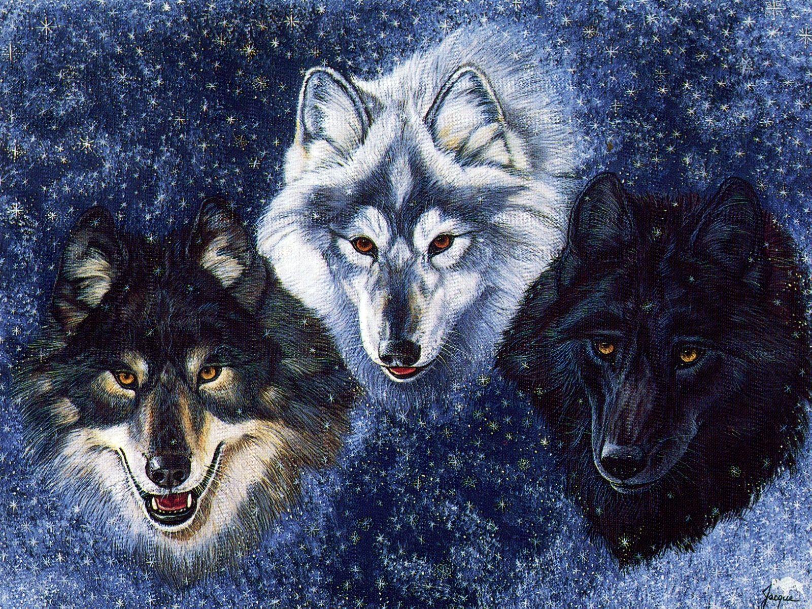 wolf fantasy pics