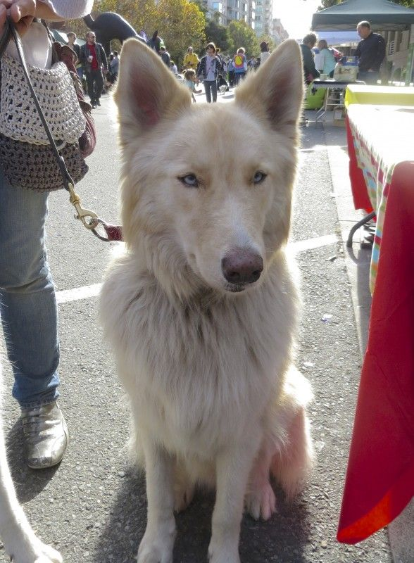 Pin On Mixed Breed Dogs
