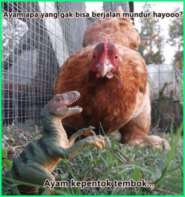 12 Meme Ayam Paling Gokil Dan Kocak Yang Bikin Ngakak Dunia Fauna Hewan Binatang Tumbuhan Hewan Ternak Ayam Kandang Ayam