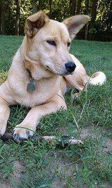 Top 10 Rare Dogs Rare Dog Breeds Dog Breeds Rare Dogs