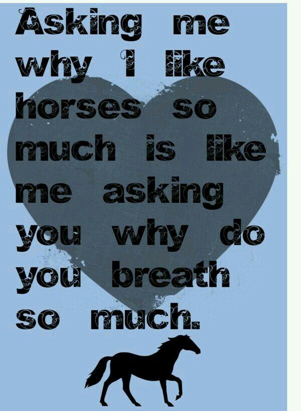 Haha Finally An Answer Inspirational Horse Quotes Horse Quotes Horse Riding Quotes