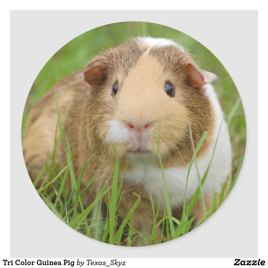 Pin On Sweet Animals
