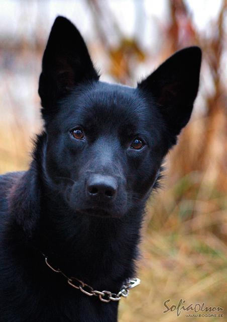 Pin On Koirat Dogs