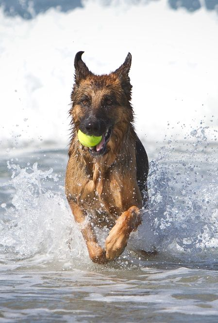 The Ultimate Pet Friendly Guide To Los Angeles Ca German Shepherd Pets