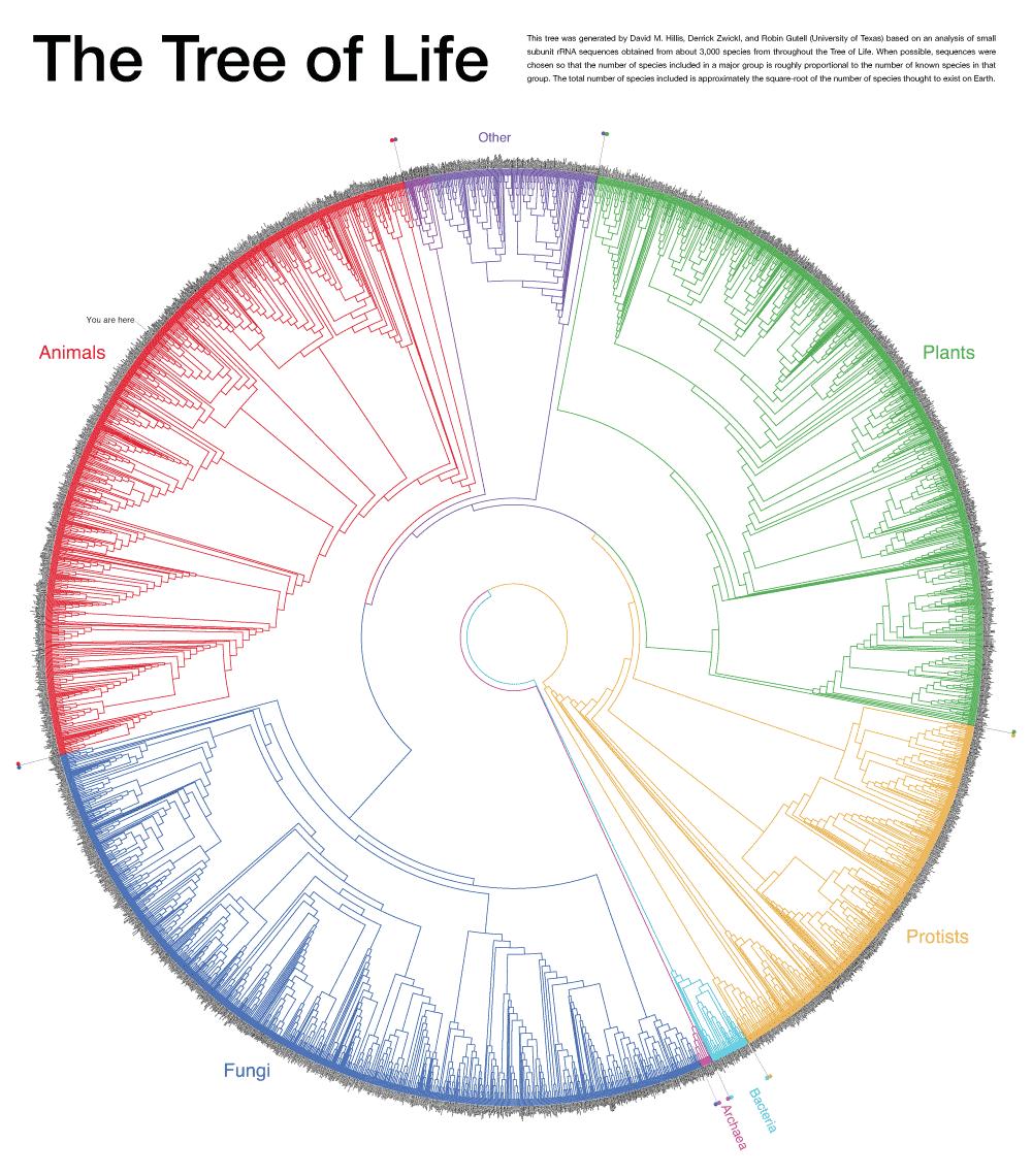 El árbol de la vida.David M. Hillis, Derrick Zwickl, and Robin Gutell (University of Texas)