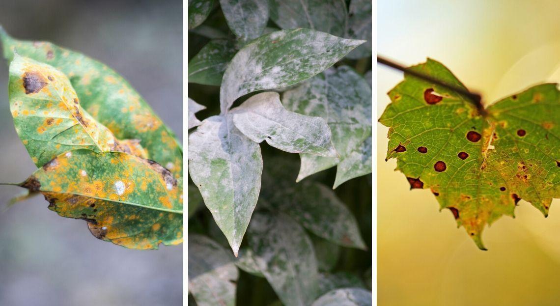 Jardin : les 10 principales maladies des plantes en 2020   Feuilles de plantes, Plante, Conseil ...