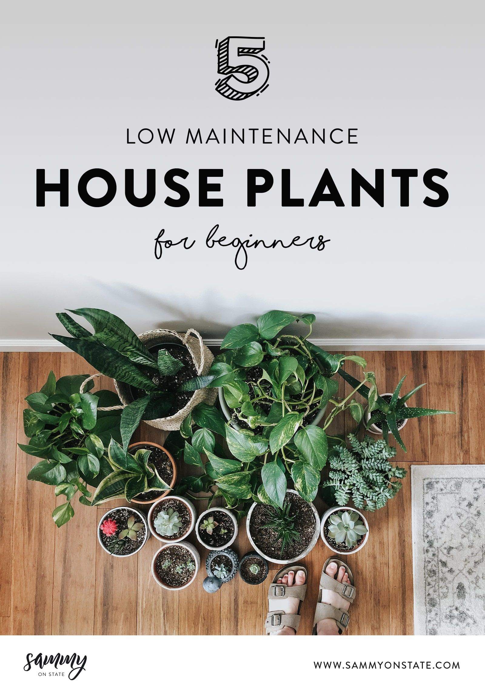 5 Low Maintenance House Plants That Are Hard To Kill