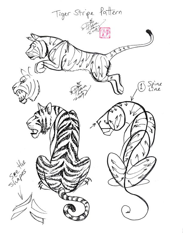 draw a tiger 2 by diana huang 4 kids fun pinterest diana tigers and deviantart