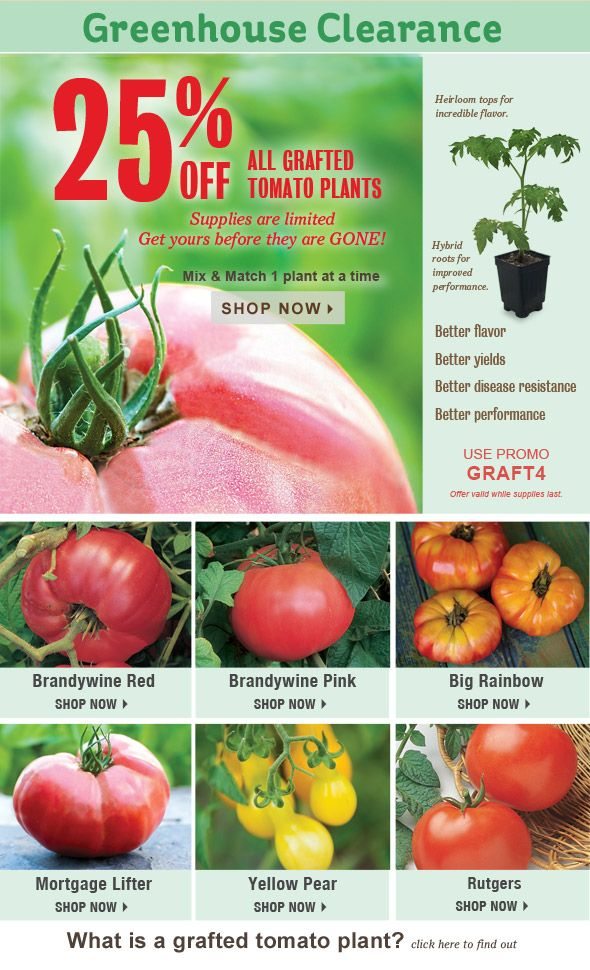 Burpee S Tomato Plant Greenhouse Clearance 25 Off Grafted Tomatoes More Is Going On Now Kitchen Garden Plants Planting Vegetables Vegetables