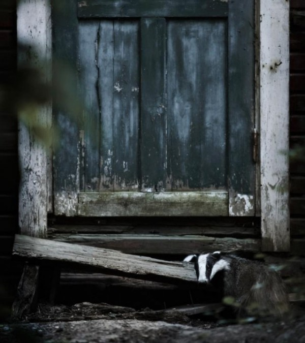 b2ap3_thumbnail_Forest-Animals-in-Abandoned-Houses-by-Kai-Fagerstrom-18-600x675.png