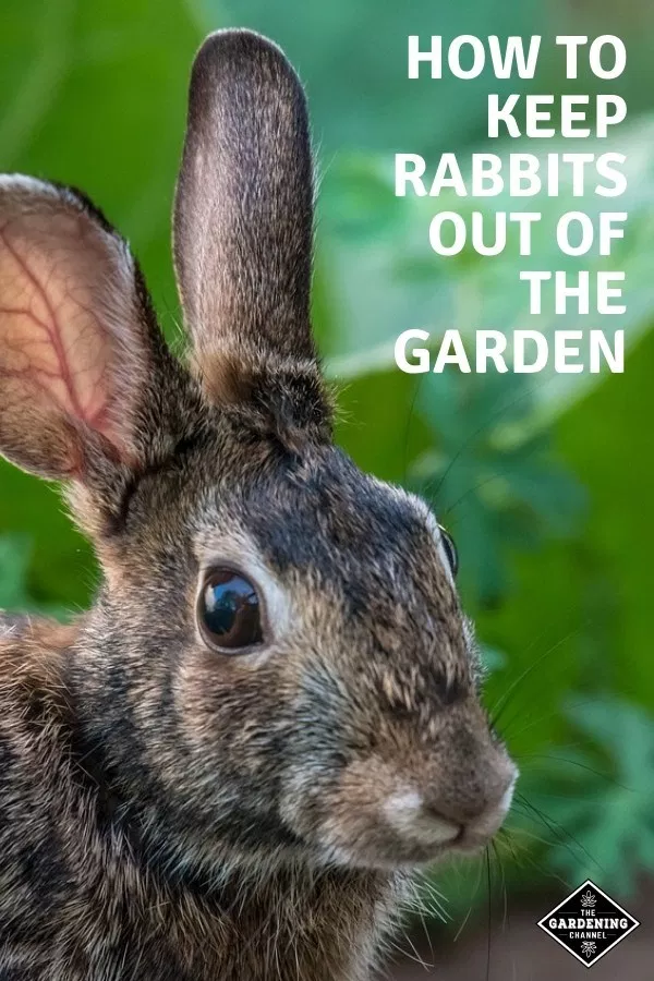 How to Keep Rabbits Out of the Garden | Home vegetable ...